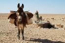 Foto asino nel Sahara